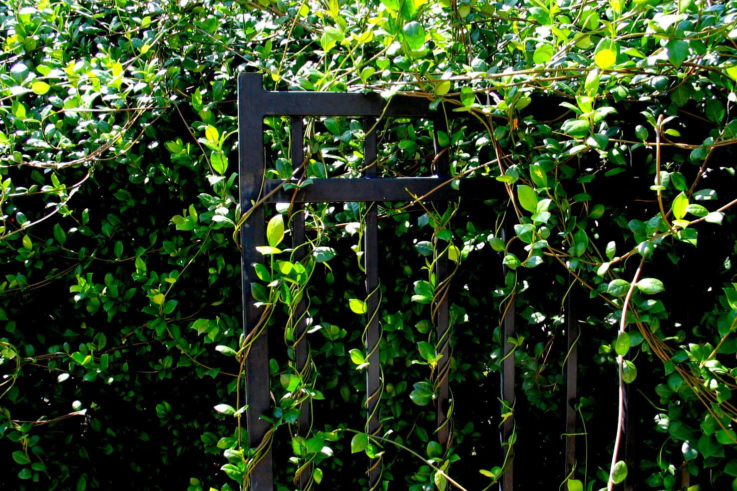 Živý plot